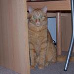 21.09.2004 - Mir geht es nicht gut, habe viel abgenommen ...