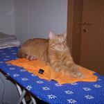 05.09.2004 - Beim bügeln bekomme ich immer Unterstützung ...