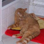 23.12.2004 - Das Bad ist ja sowieso der beste Platz zur Körperpflege ...