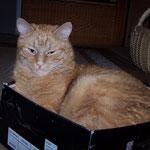 16.07.2007 - Ich, der Kisten-Kater Felix ...