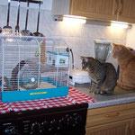 21.12.2007 - Gemeinsam beobachten wir Oskar, den Hamster ...
