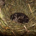 Das ist der kleinste Nachwuchs von der Katzenmama ...