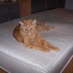 06.07.2004 - Auf so einer Matratze hat man schön Platz ...