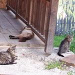 Familie Katze ...