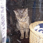 15.04.2006 - Sie hat sich an den Container gewöhnt und fühlt sich hier inzwischen zu Hause ...