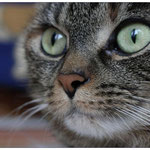 DSDS-Nasenfoto von Kessy ...