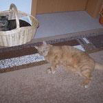 14.03.2008 - Verkehrte Welt - das ist eigentlich mein Körbchen ...