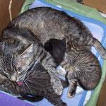 Katzenwäsche durch Mama ...