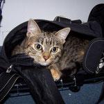 10.03.2008 - Kessy ist jetzt seit 7 Monaten bei uns ...