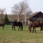 31.03.2007 - Die Pferde auf ihrer Koppel ...