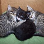 Wenn Mama unterwegs ist, kuscheln die Geschwister zusammen ...