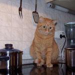 24.12.2005 - Was will dieser Hund in meiner Küche ?