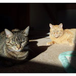 Sonnenstrahlen genießen ...