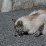 Katze eben ...