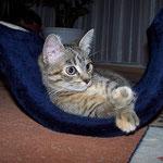 20.09.2007 - Die Wippe in der guten Stube gefällt mir gut ...
