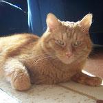 14.10.2007 - Bloß gut, dass es hier im Haus genügend Sonnenplätze für alle gibt ...