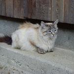 Und die feine Katzenmama ...