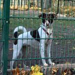 Hund im Freitaler Tierheim ...
