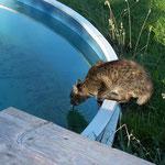 =ktober 2006 - Sie trank meistens auch aus dem Pool ...