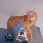 13.02.2006 - Eva's Zimmer wird gemalert. Ich lass mich dann mit reintragen, wenn alles fertig ist ...