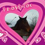 06.01.2008 - Anka, ihr Pferd ...
