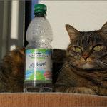 """Die Katze mag """"Medium"""" ..."""