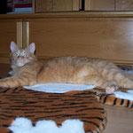 19.10.2004 - Aber auch auf diesem Tigerfell lässt es sich aushalten ...
