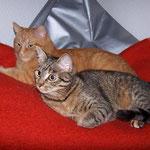 18.01.2008 - Mein Sitzsack mit Doppelbesetzung ...