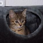 06.08.2007 - Kessy seit zwei Tagen bei uns, sitzt im Rascheltunnel