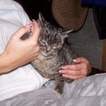05.02.2006 - Durch viel gutes zureden, lässt sich Lucy schon streicheln ...