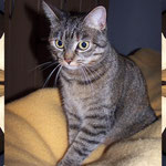 März 2009 - Kessy trettelt im Schlafzimmer ...
