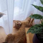 21.03.2004 - Ich siele mich gern unter der Gardine am Wohnzimmer-Fenster herum ...