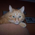04.10.2008 - Vorn der neuen Kratztonne im Wohnzimmer kann ich alles bestens überblicken ...