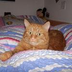 03.10.2004 - Der nächste Lieblingsplatz von mir, ist Eva's Bett ...