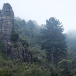talassemtane forest