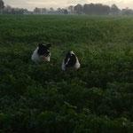 mit Brody durchs Feld