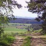 Waldweg, wandern