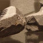 Trilobit - * De Oude Aarde*