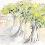Südliche Baumgruppe