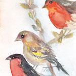 Wintervögel mit Amélie