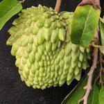 atemoya  ( Annona squamosa x A. cherimola )