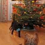 Rockin' around the Christmas tree....