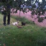 Fiete und seine Hundefreunde. (Foto: Fam. Junqueira)
