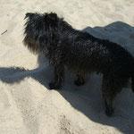 """Beim Buddeln im Sand hat Clara keine Maus und auch keinen Schatz gefunden - dafür hat sie sich herrlich """"paniert"""" :-)"""