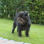 Clara - proud guardian of house and garden :-)