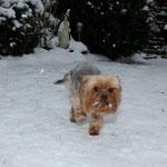 Hier stapft Amy durch den Schnee