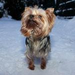 Gianni wittert es schon, es gibt bald noch mehr Schnee!