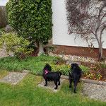 Die zwei ließen sich zunächst etwas Zeit zum Kennenlernen. Asterix zeigte Karla erst einmal die Blümchen die schon im Garten blühten ;-)