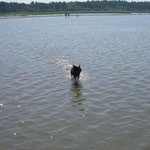 Affenpinscher können vieles - auch über's Wasser rennen :-)
