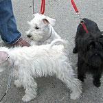 Auf Ausstellungen kann man viele nette Hunde treffen :-)